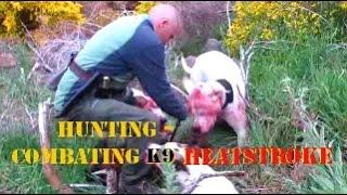 Hunting & Combating K9 Heat Stroke