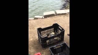 Рыбалка в Болгарии(, 2014-08-19T19:46:04.000Z)