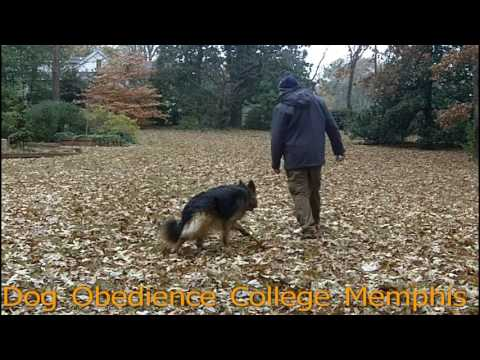 Caspian Training Practice Dog Obedience College Memphis