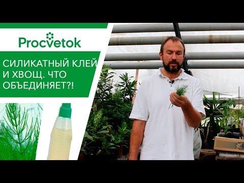 Вопрос: Какие есть криопротекторы для растений?