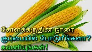 சோளக்கருதின் நாரை குப்பையில் போடுரீங்களா? கவனியுங்கள்! - Tamil Health Tips