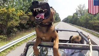 Селфи с собакой чуть не стало причиной аварии