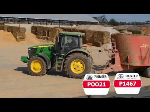 Corn silage pivotal in dairy expansion in northern Victoria