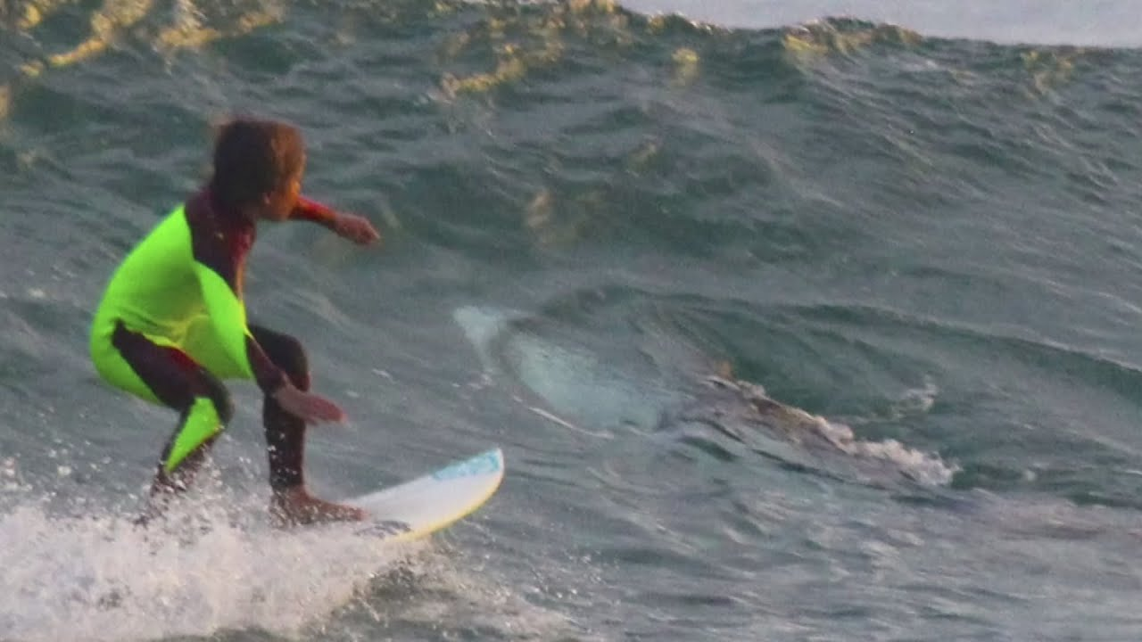Young Surfer Unknowingly Shares Wave With A Shark And His Dad Captures It On Camera