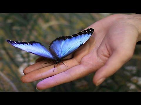 Х/ф Поцелуй бабочки. Боевик, мелодрама, криминал (2006) @ Русские сериалы