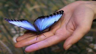 Что такое эффект бабочки?!