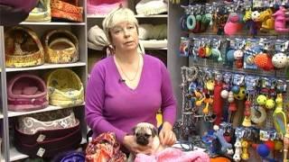 видео одежда для мопса