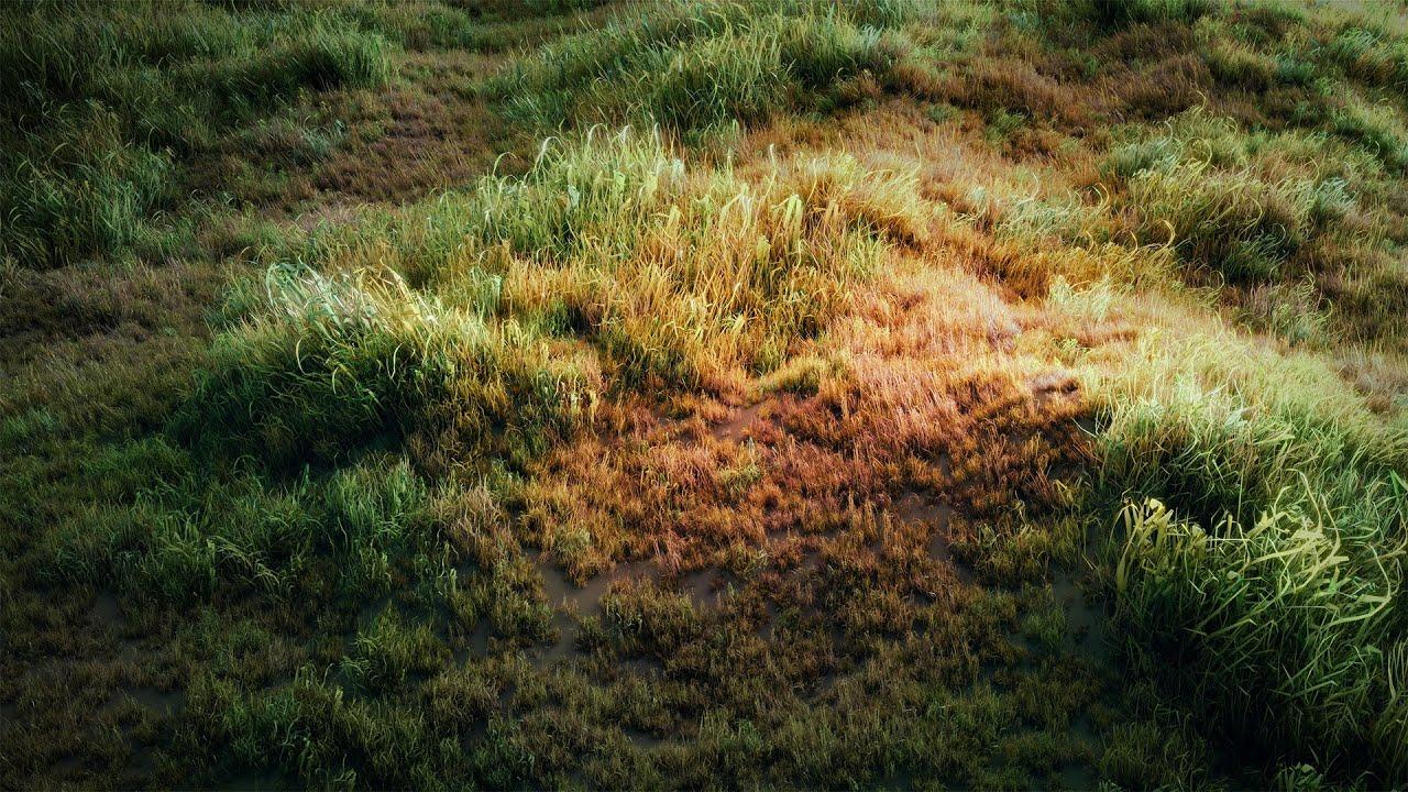 wild grass texture. It\u0027s YouTube. Uninterrupted. Wild Grass Texture H