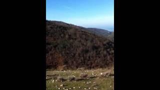 """Adventure sul Gargano """" foresta umbra """""""