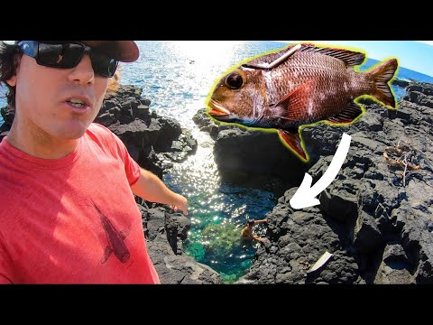 We FRIED FISH In A TIDE POOL (CATCH & COOK) Spearfishing Hawaii