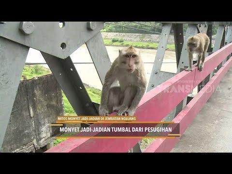 MITOS MONYET JADI-JADIAN DI JEMBATAN NGUJANG