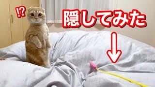 ベッドではしゃいでいる短足猫にイタズラをしてみると…?