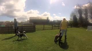 Fun 4 Dogs - Jersey