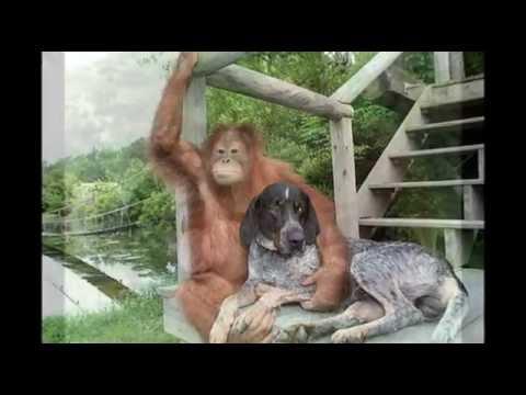 L'amore degli animali