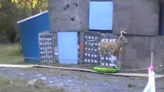 Running Deer Target