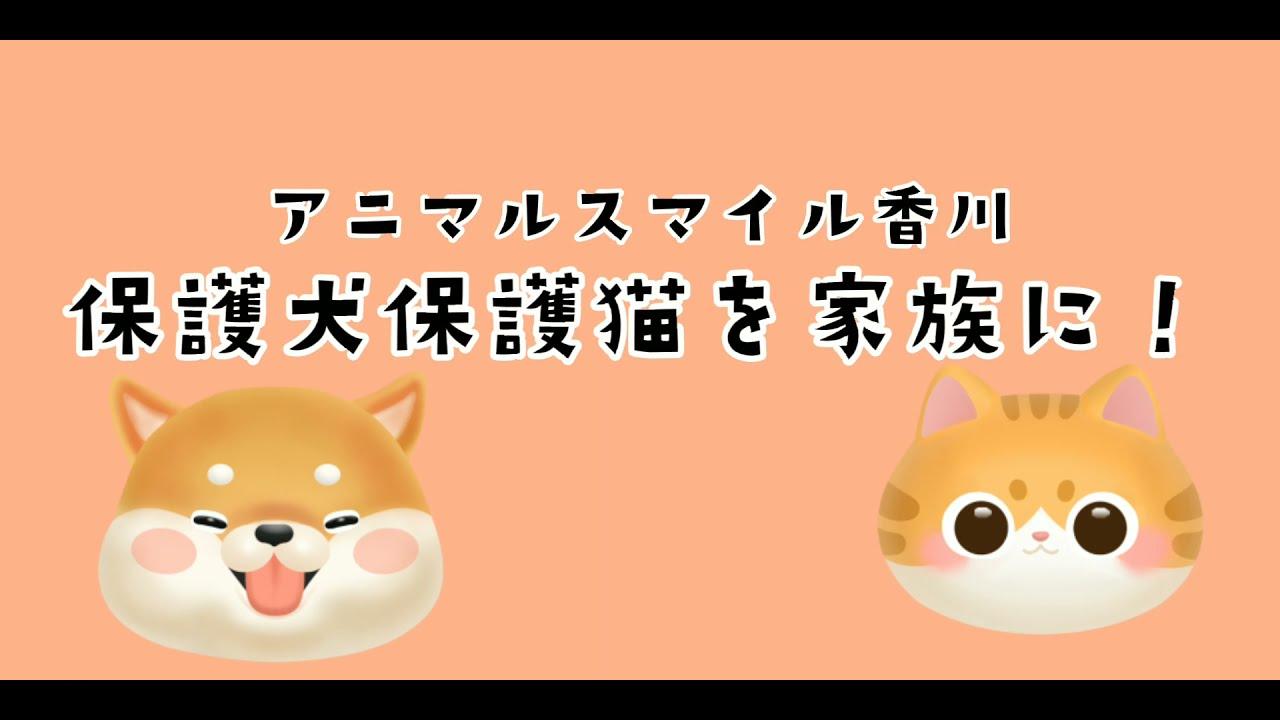 🌸アニマルスマイル香川🌸保護犬保護猫を家族に!🌸2021年10月10日