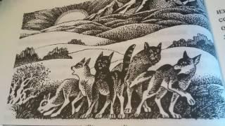 Коты воители Рассвет