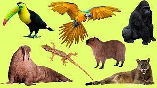 Животные для детей   Учим диких животных   Учим названия и звуки диких животных для детей