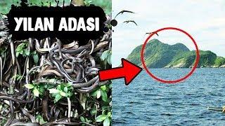 Yılanlarla Dolu Ada - Bu adaya Ayak Basmadan Önce Bir Daha Düşün, Bu Adada Bir Çok Yılan Var