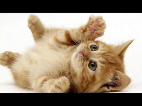 Persuasive Speech against Animal Testing