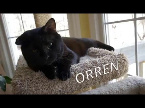 """Train wreck"" cat- after rescue, Orren finds forever home"