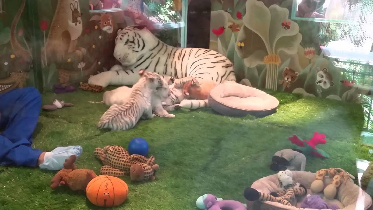 siegfried and roy secret garden baby white tiger - Siegfried And Roy Secret Garden