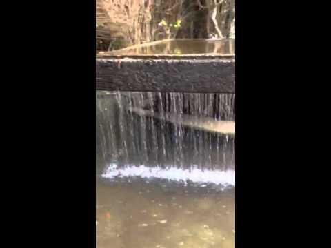 Fountain at Sequoia Park