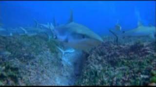 OceanWorld 3D trailer