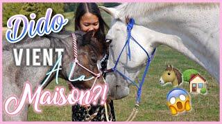 DIDO VIENT À LA MAISON??! 😱🏡🐴 - Vlog