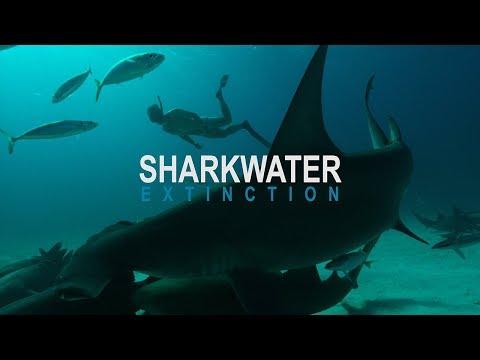 Sharkwater: Extinction – Video Teaser