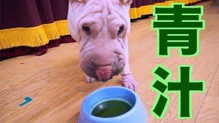 【購入した青汁はこれ】 犬用 サプリメント 発酵生青汁冷凍便 老犬 介護...