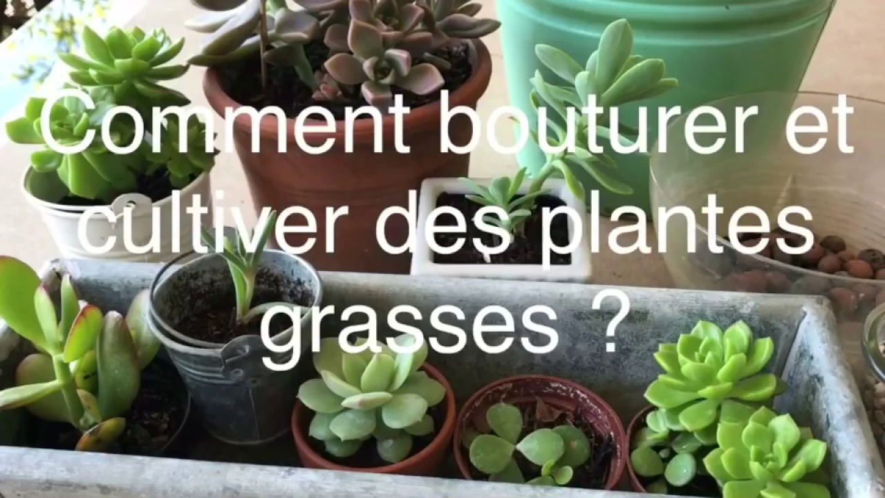 Bouturer Et Cultiver Des Plantes Grasses De A Z Youtube