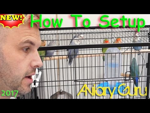 How to Setup a cage for Pet Lovebirds ! Lovebird care 2017 !