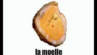 Learn French - le tronc de l