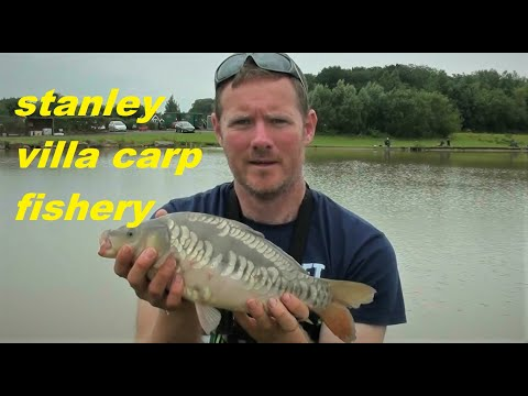 Hard Fighting Small Carp At Stanley Villa Carp Fishery