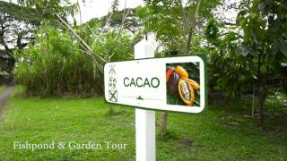 Kualoa Garden and Fishpond Tour