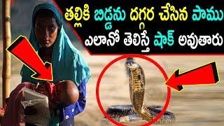 తల్లికి బిడ్డను దగ్గర చేసిన పాము ఎలానో తెలిస్తే షాక్ అవుతారు..! | Snake Did Miracle in Village