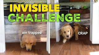 My Dogs Reaction to the Invisible Challenge