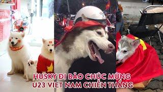 Husky Đi Bão Chúc Mừng U23 Việt Nam 2018 - Funny Husky 2018  -  MEOMEOTV ✔
