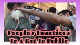 Bringing Pet Rat To Mall