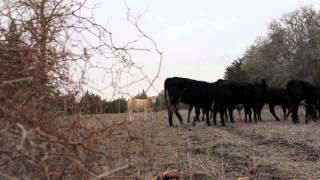 Blockhead- Carnivores Unite