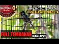 Gelatik Batu Gacor Full Isian Tembakan Tajam Jernih Mantap Milik Om Iput  Mp3 - Mp4 Download