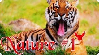 Nature #1  Животные  Природа  Красивое видео  Animal videos