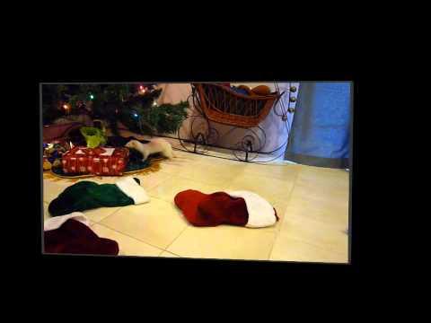 A Very Ferret Christmas - 2010