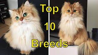 Top 10 Cat Breeds    Top 10 Cat Breeds in the World