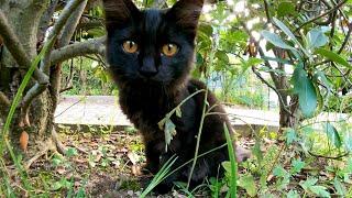 公園で見掛けた子猫の黒猫が可愛過ぎる