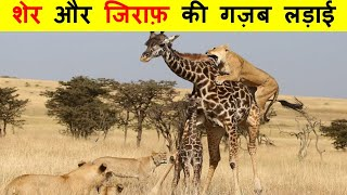 बाल-बाल बचे ये जंगली जानवर ? This is how innocent animals save their lives. Thumb