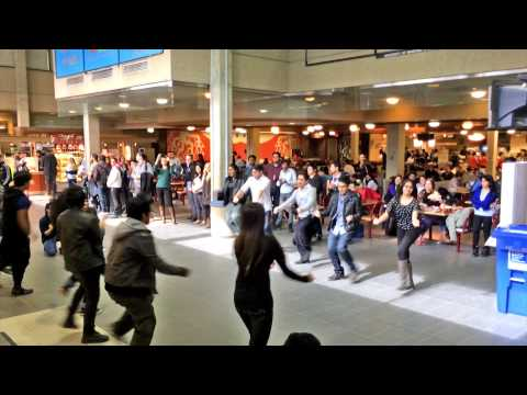 ICC World t20 Bangladesh 2014 Flash Mob - University of Manitoba@Winnipeg