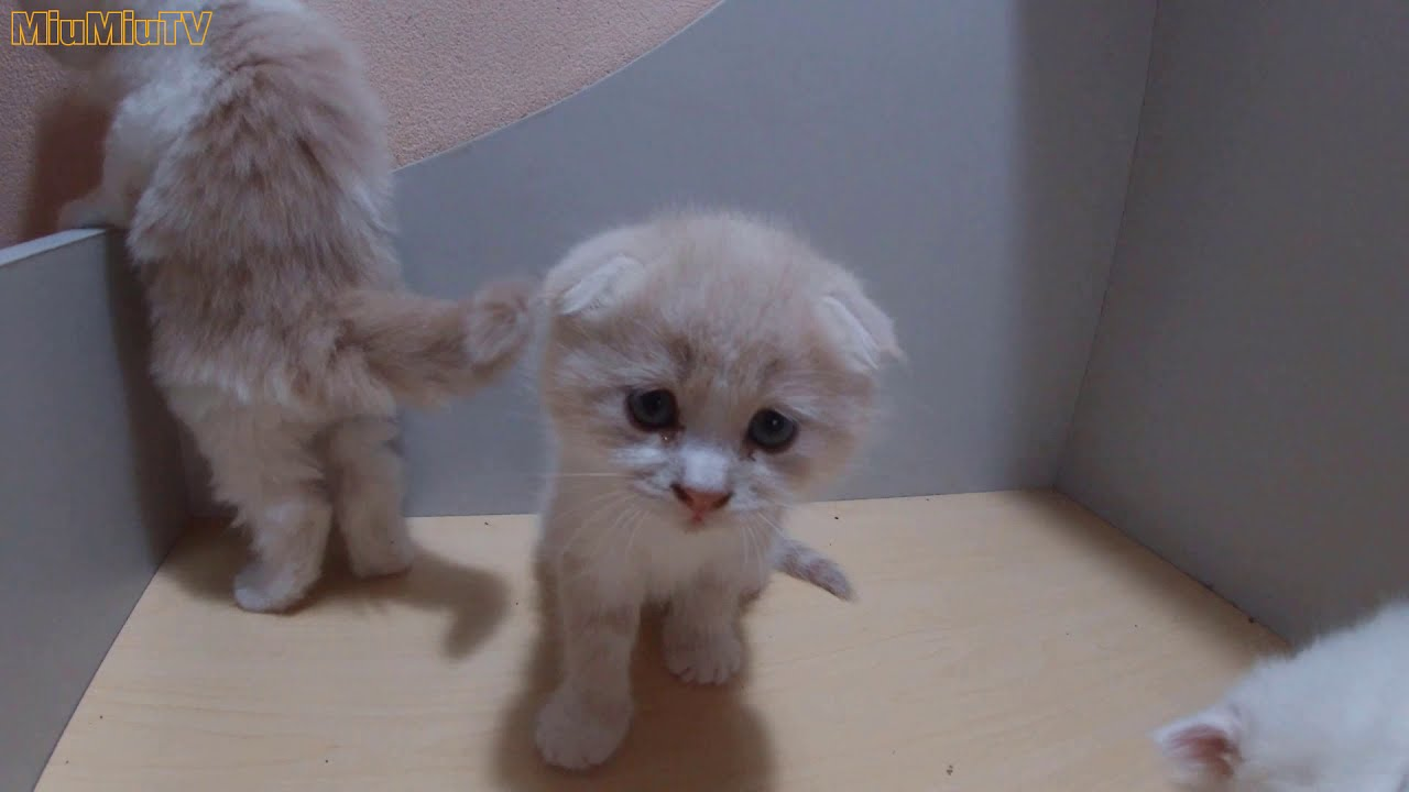 4 week old kitten mischievous and adorable