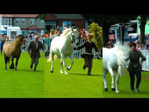 Dublin Horse Show Connemara Stallion Parade RDS 2014